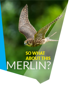 so-what-about-this-merlin